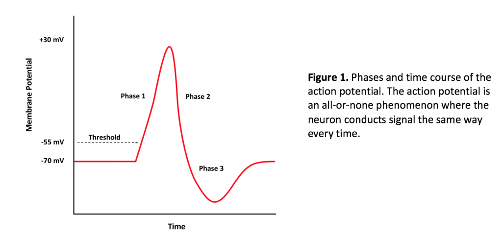 The action potential is an all or none phenomenon where the neuron conducts signal the same way every time.