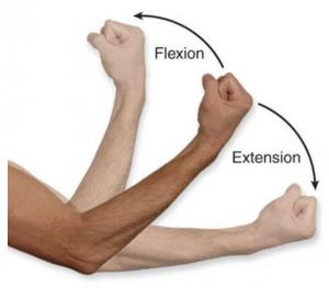flexion extension