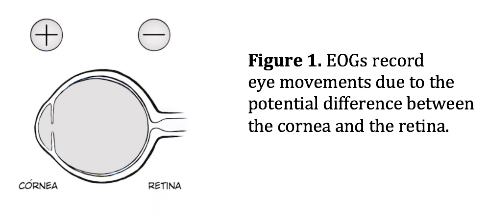 EOGs record eye movement due to the potential difference between the cornea and the retina.